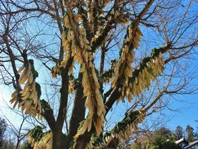 まさかの大根ツリー!京都「円福寺」の冬の風物詩がちょっとスゴイ