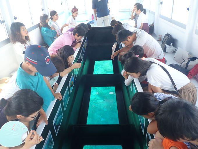 これが那覇港の海中!?美しいサンゴ礁を堪能しよう