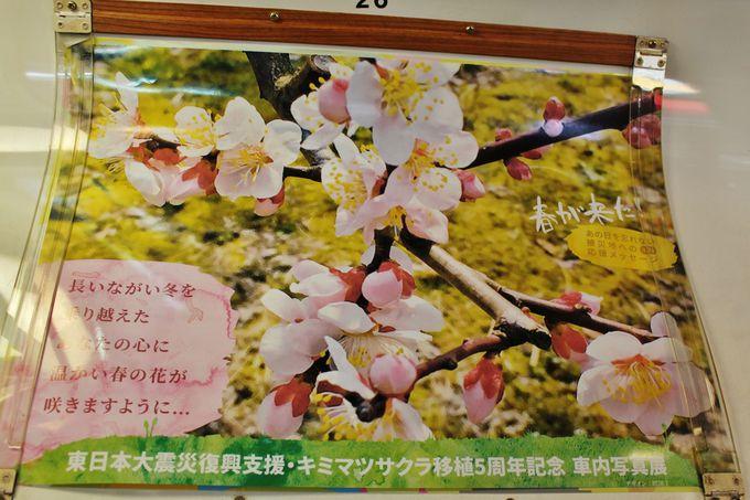 祈り・願いの桜と共に走る