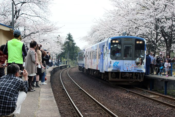 能登を彩る四季の花々〜桜・のとキリシマツツジ・紫陽花〜