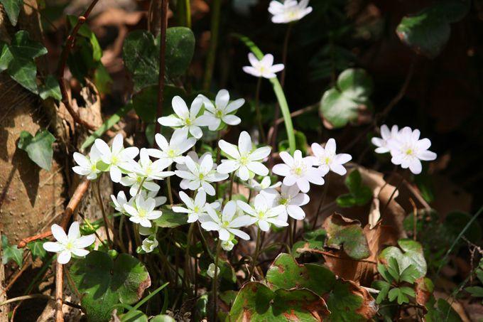 NHK朝ドラ『まれ』のロケ地巡りと季節の風物詩に触れる能登の旅