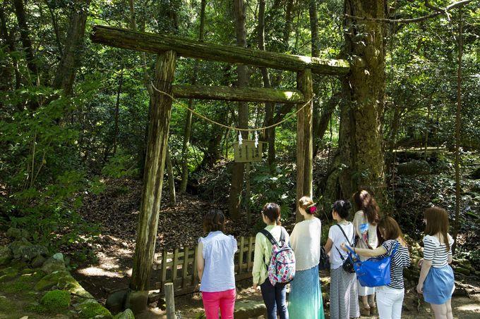 自然のエネルギーを感じる入らずの森。国の天然記念物にも指定♪