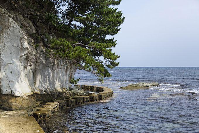 九十九湾沿岸部を歩く周遊観察路!海の眺めも見ながら生物を探索♪