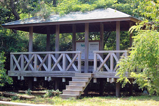 バードウォッチャー必見!舳倉島は世界有数の渡り鳥の休息地♪