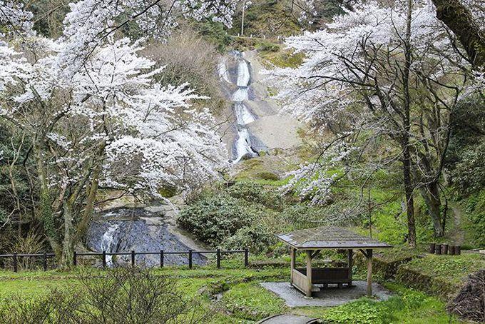 二つの滝が夫婦のように混ざり合う「男女滝」♪