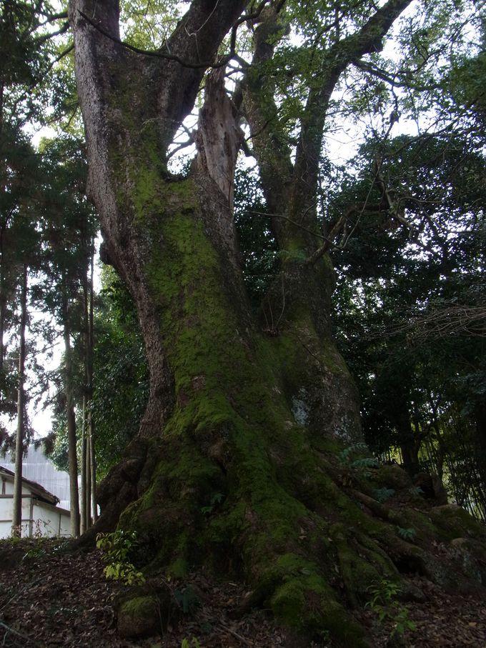 忍阪坐山口神社(おしさかにますやまぐちじんじゃ)