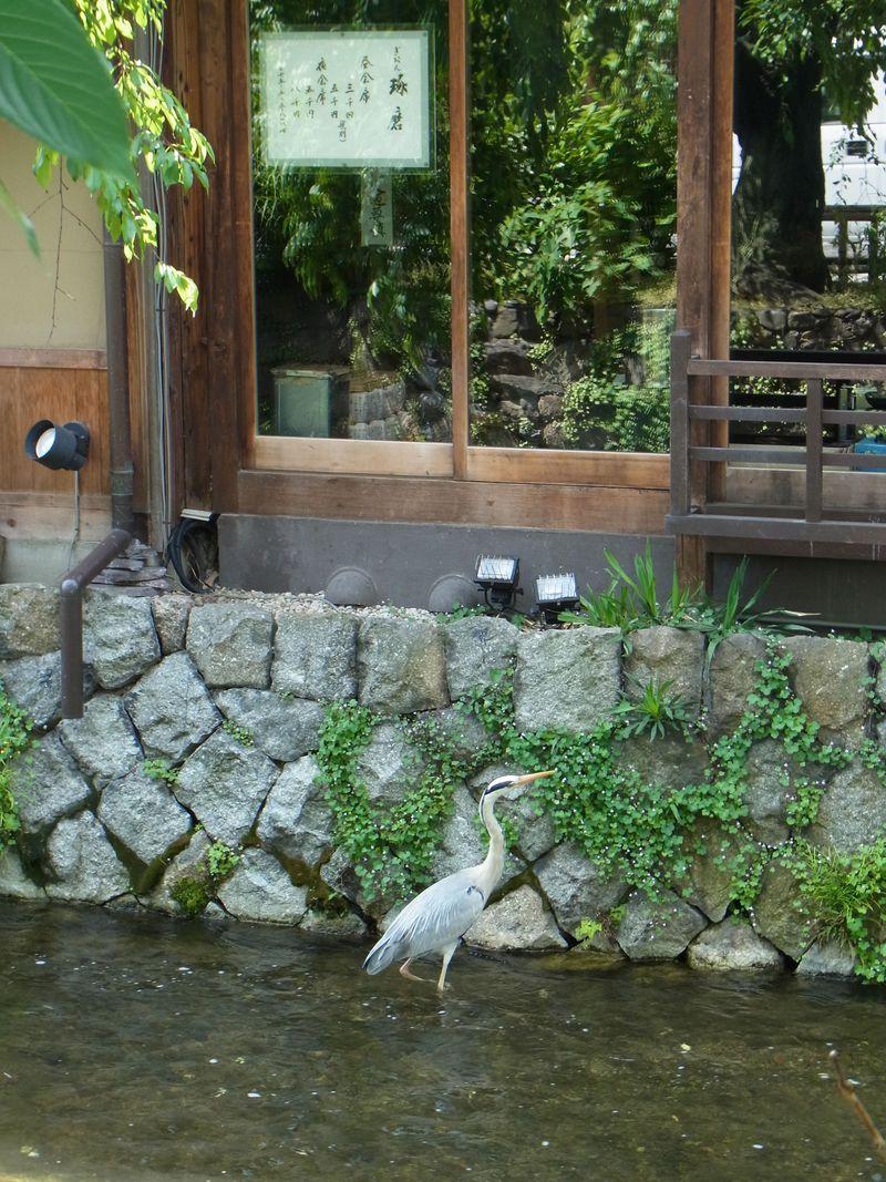 お江戸へタイムスリップ・京都の蕪村の風景