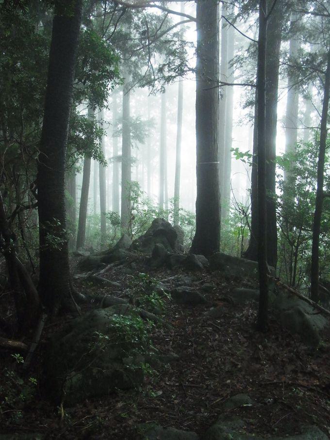 額井岳山頂(821.6m)から戒場山(737.6m)へ