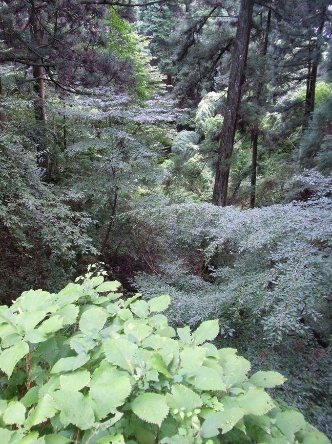 比叡山のもっとも比叡山らしい自然一杯の西塔エリア