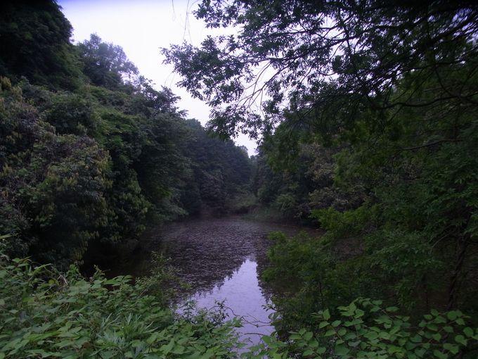 高安山から十三峠への途中にある神秘的な隠れ沼