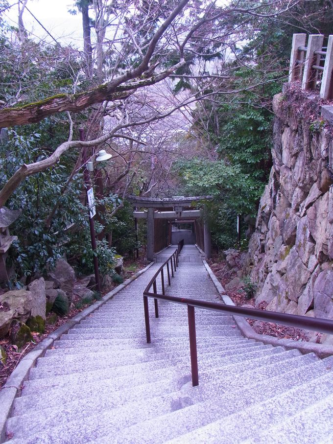 本殿のある夫婦岩まで直登ルートは740段余りの石段の登り降り