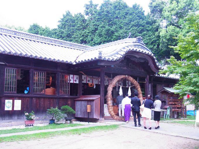 海洋性照葉林の残る牛窓神社は自然の宝庫