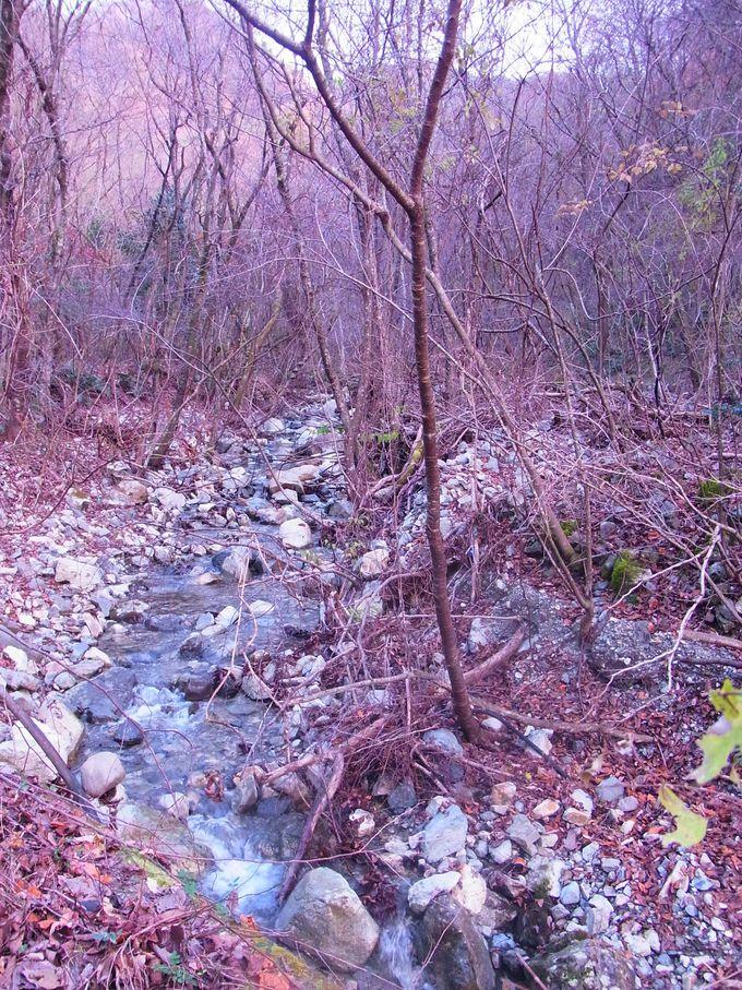見事な松山の残る有馬六山の終着地点は水無川