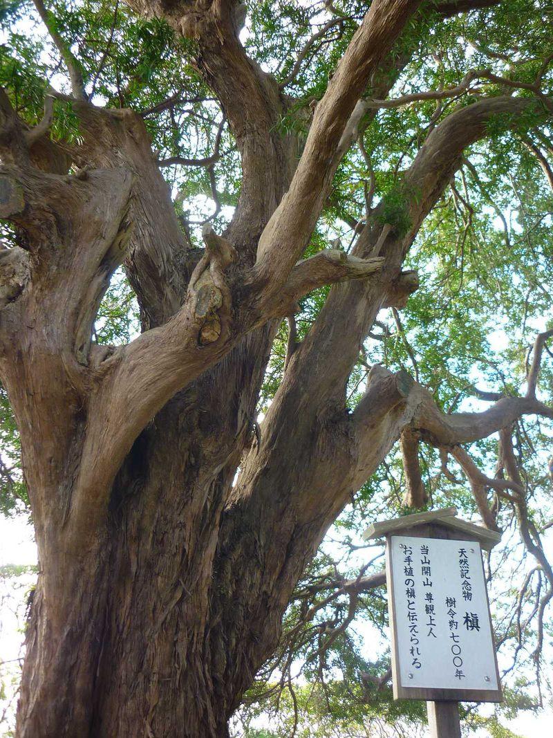 鎌倉駅から徒歩14分、北条政子ゆかりの「安養院」世界のクロサワも!