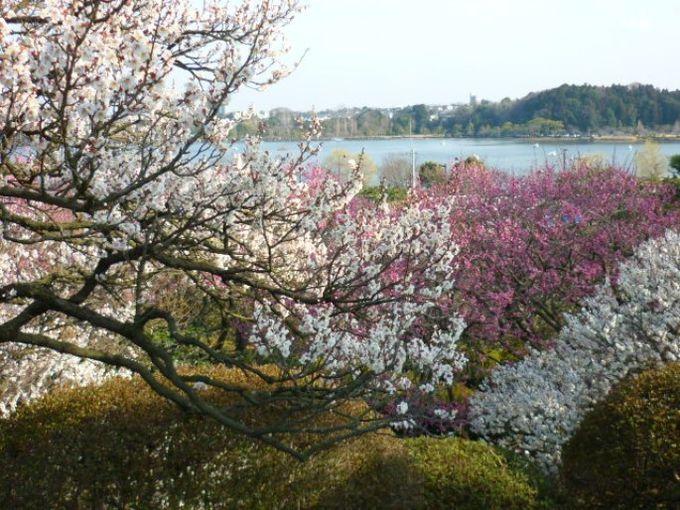 ひょうたんの形の千波湖(せんばこ)