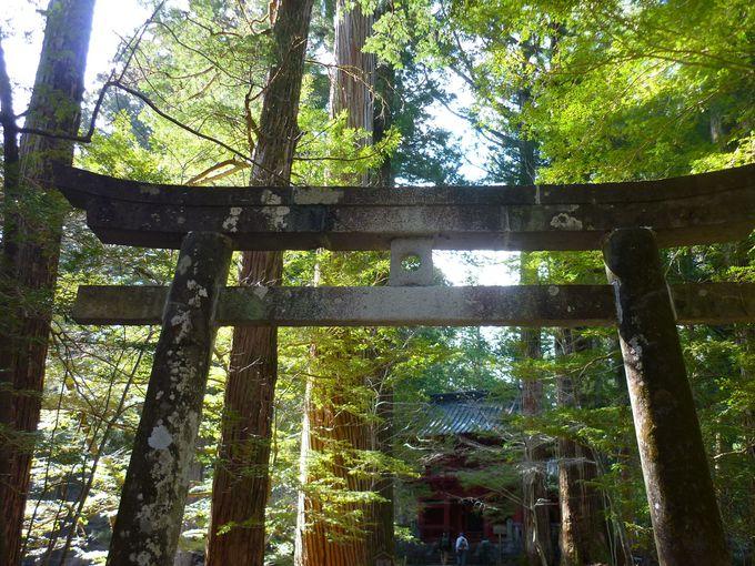 神域の広さは伊勢神宮に次いで2位!日光の隠れ家パワースポット「滝尾神社」