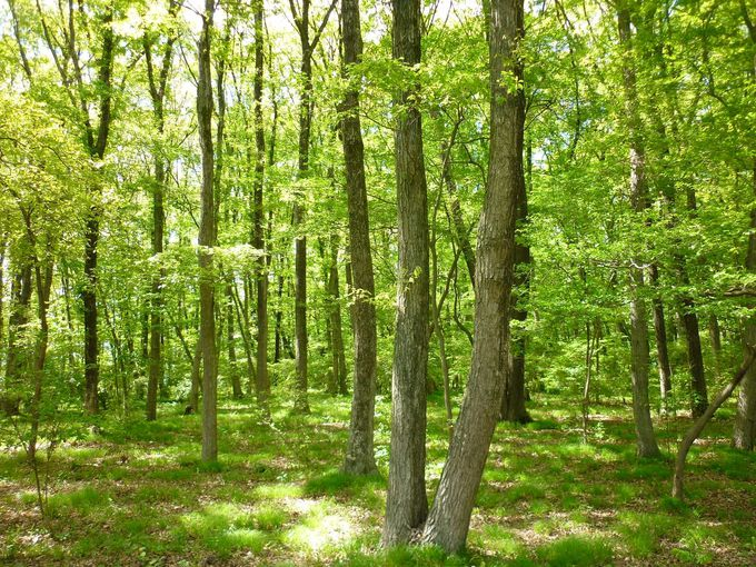 みのりの森で散策
