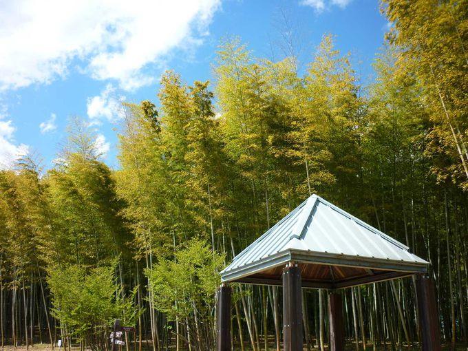 竹林ではタケノコ掘りも!