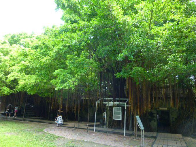 緑の森に覆われた「安平樹屋」