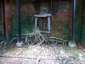 台湾のラピュタ?ガジュマルが壁からニョキ!安平樹屋を探検 台南市