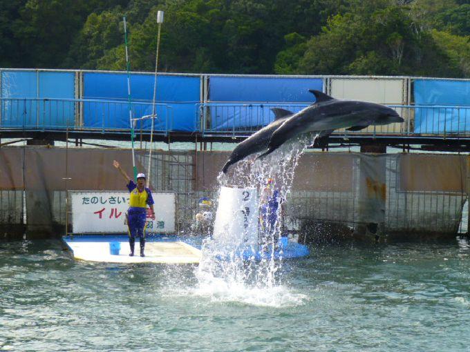 イルカと触れ合える「イルカ島」は、イルカ好きにはたまらないスポット