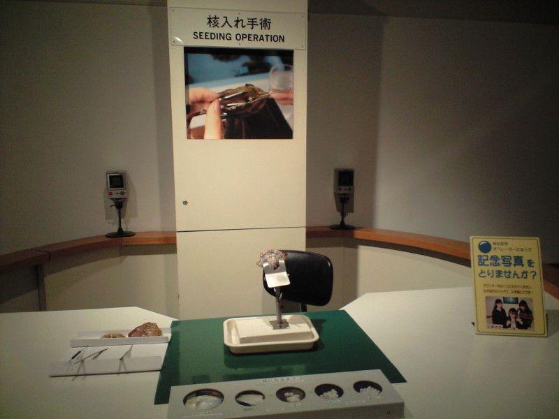 真珠ができる仕組みがわかる真珠博物館