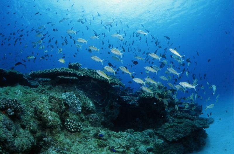 サンゴや魚が途切れることなく続く海!