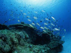 奄美で神秘の海中散歩!水中観光船「マリンビューワーせと」