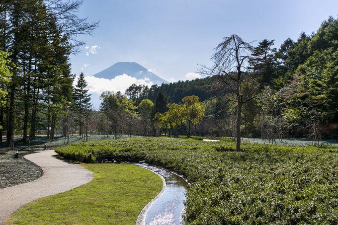 富士山を望む「忍野 しのびの里」の日本庭園