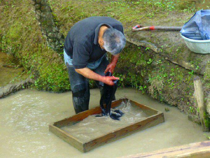 大島紬村で「泥染め」を見よう