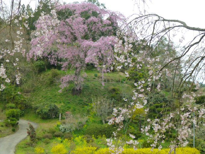戊辰戦争の鎮魂「忠七桜」