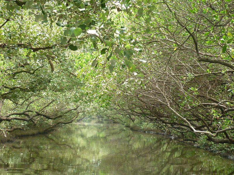 古都台南で自然を満喫!マングローブクルーズ体験「四草緑色隧道」