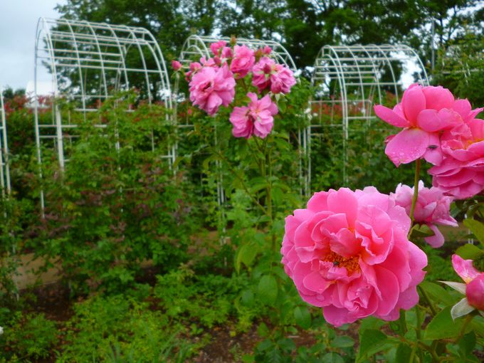 季節のお花畑「ハートフルガーデン」