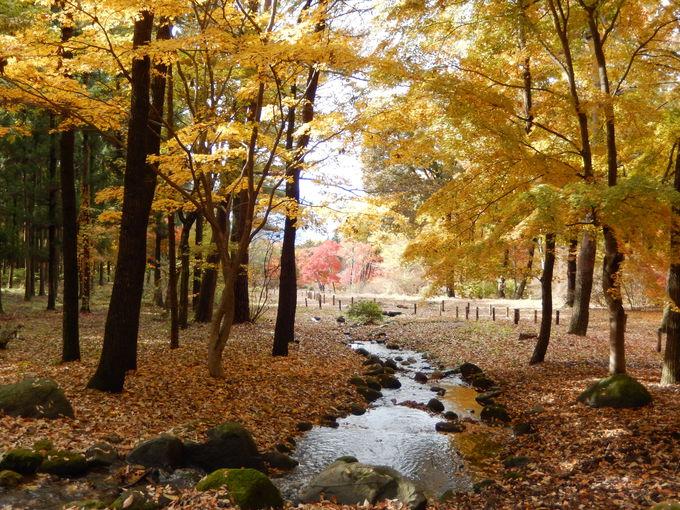 赤城自然園で四季を愉しむ