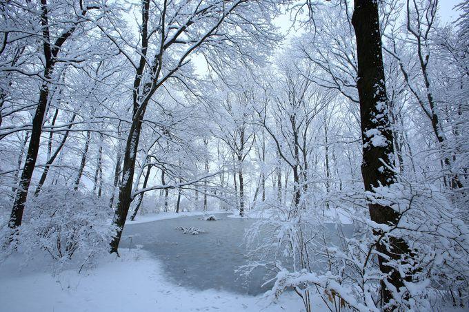 赤城自然園の冬とお気に入りの場所を探そう