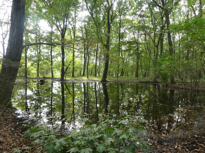 赤城自然園は森林セラピー基地