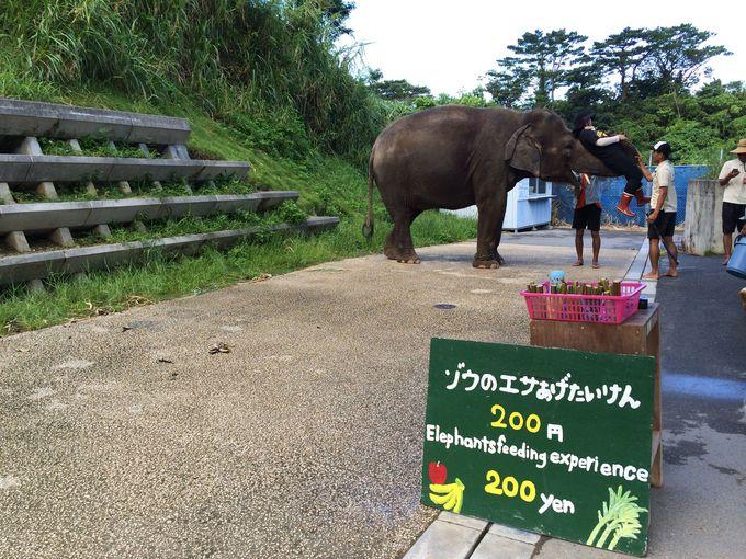7.沖縄こどもの国