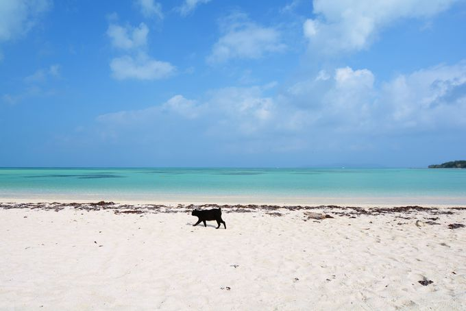 竹富島:遠浅で穏やか。エメラルドグリーンの「コンドイビーチ」