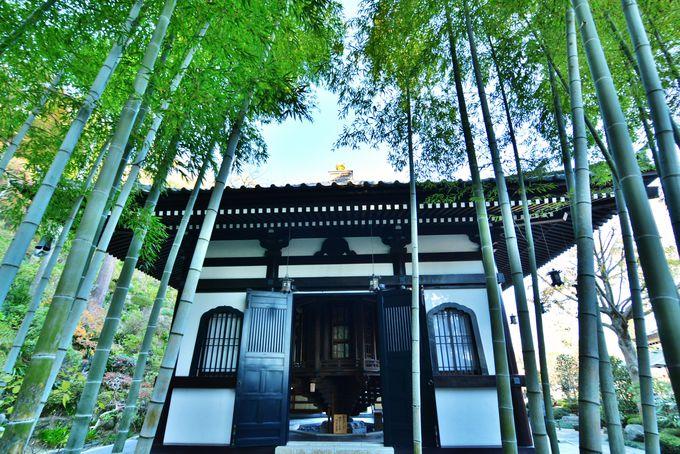 美しい竹林がある風景!