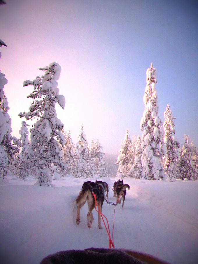 元気すぎる犬達と樹氷の森を駆け抜ける!