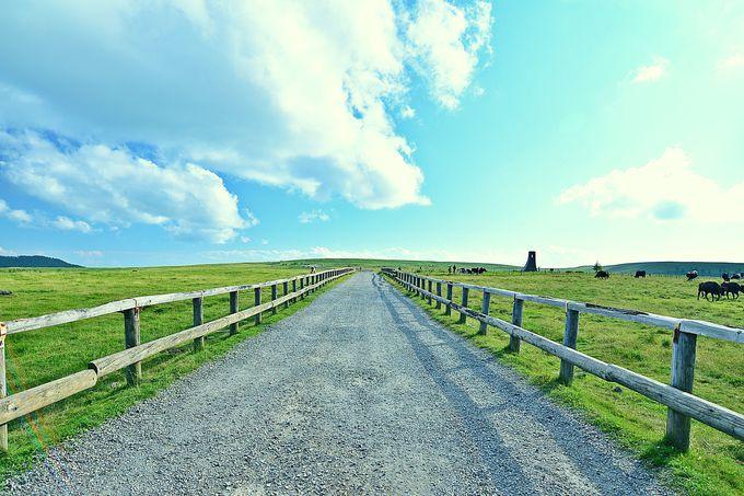 心なごむ牧歌的風景!美ヶ原牧場!