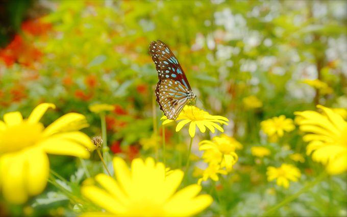 バタフライファームで蝶の飛び交う楽園へ