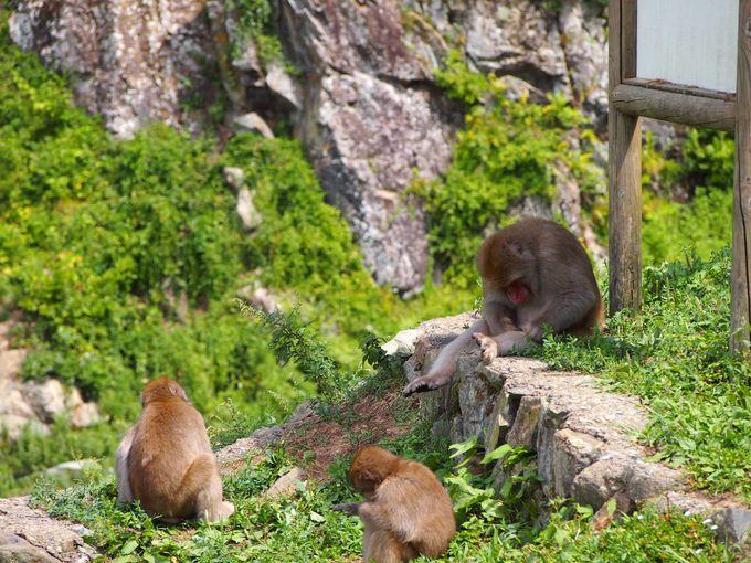 至近距離まで普通に近づく猿