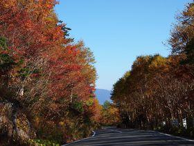 秋の乗鞍で紅葉と穂高連峰を独り占め
