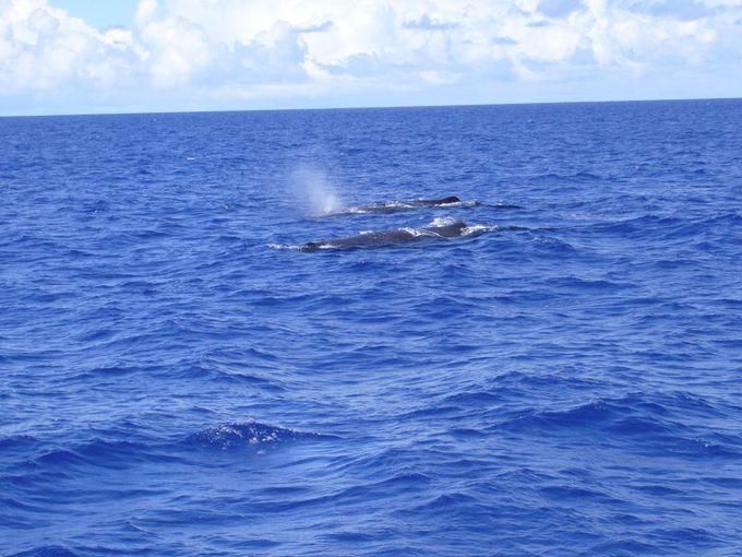 クジラのパワーを間近で感じる