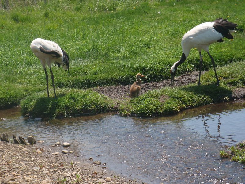 大自然と共生する街「釧路」、圧巻の湿原と丹頂鶴に出会う旅