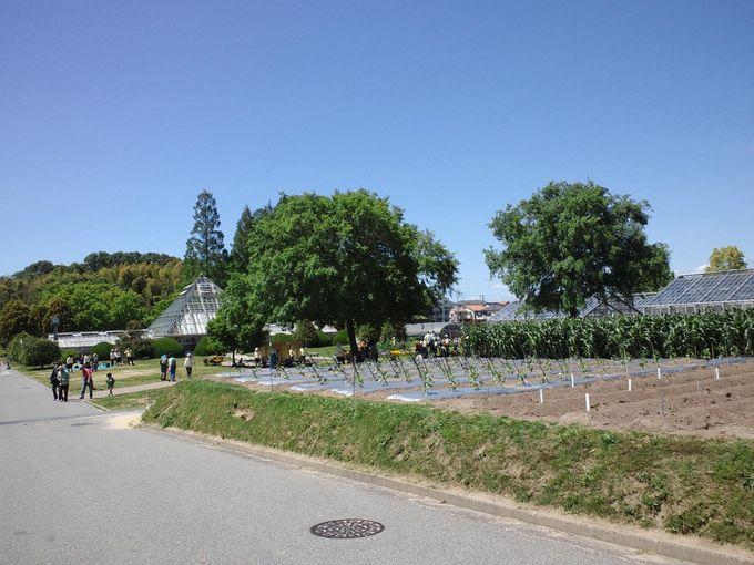 子連れに嬉しい清潔な芝生!畑のとなりでピクニック♪