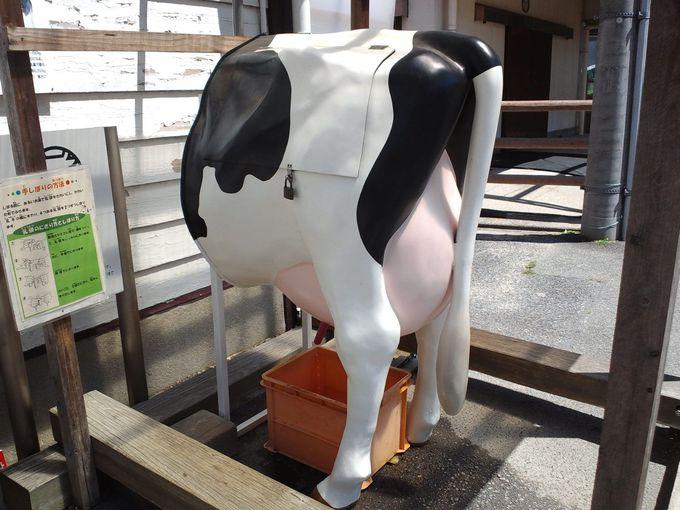 見逃せない!シュールな乳搾り体験を、ぜひ!