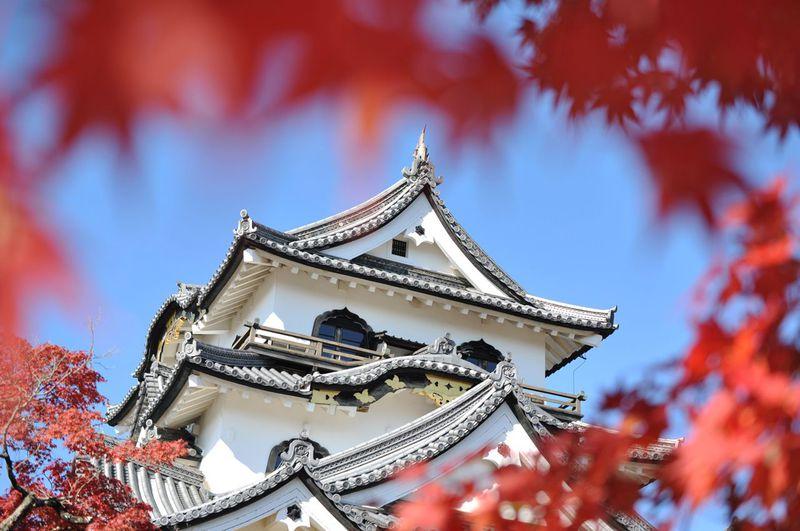 紅葉×天守はテッパン!昼も夜も美しい、国宝・彦根城へ!