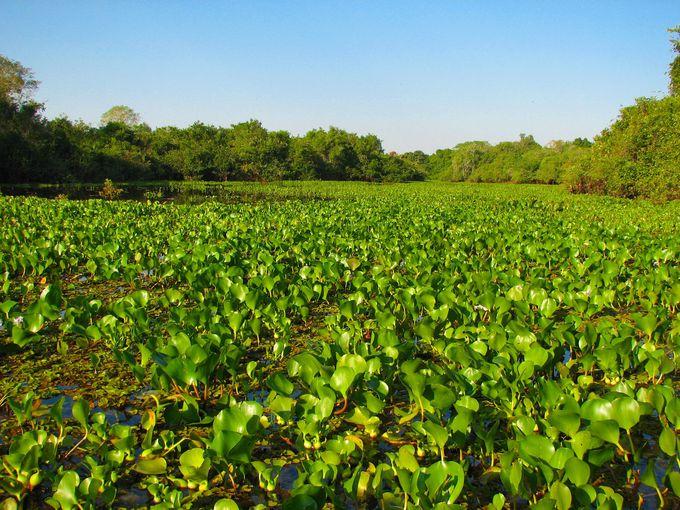 約20万平方km!世界自然遺産に登録されている世界最大級の湿原